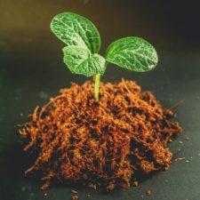 dirt-gardening-green-1214394